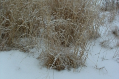 winter grasses 2