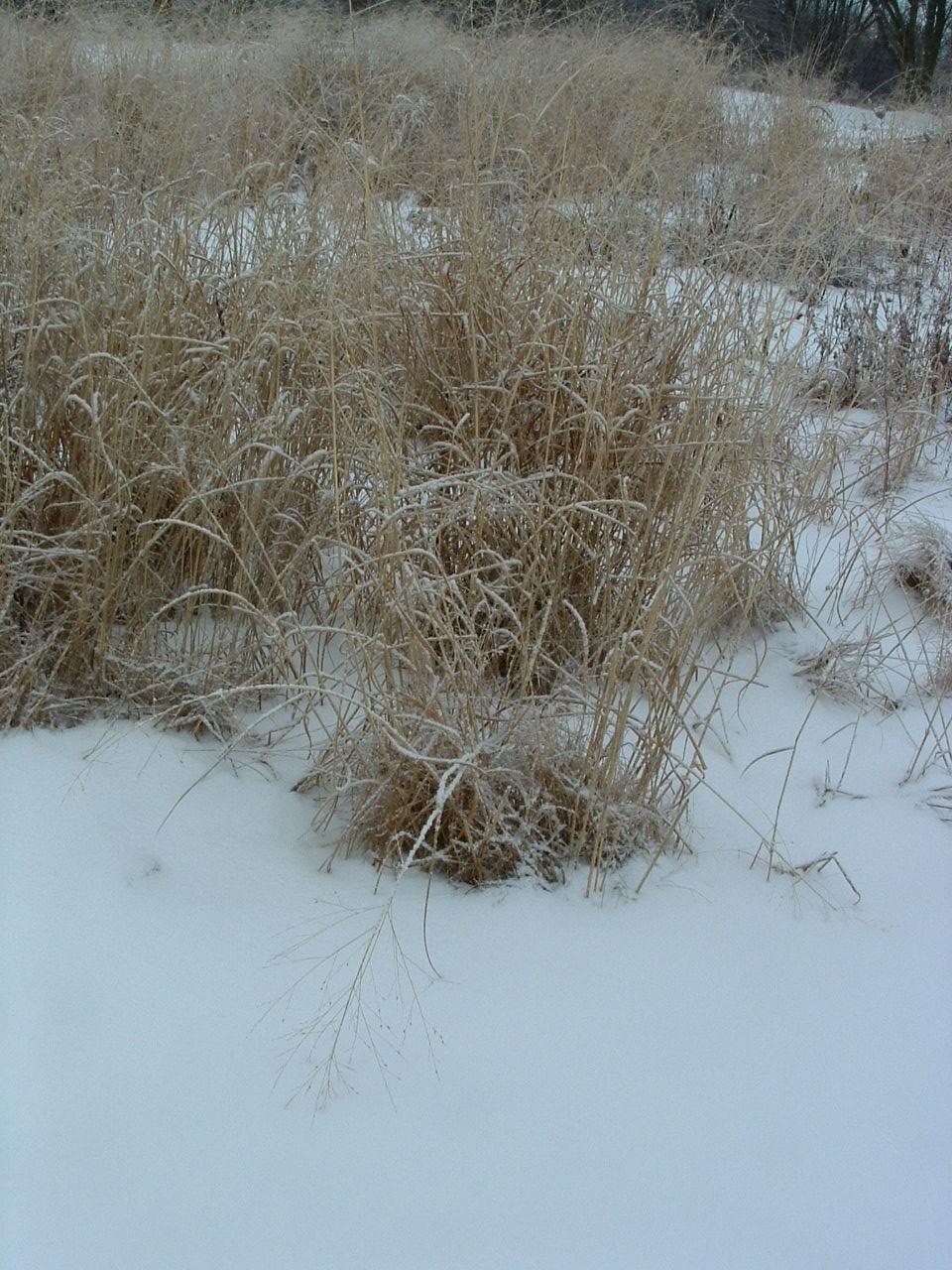 winter grasses 2