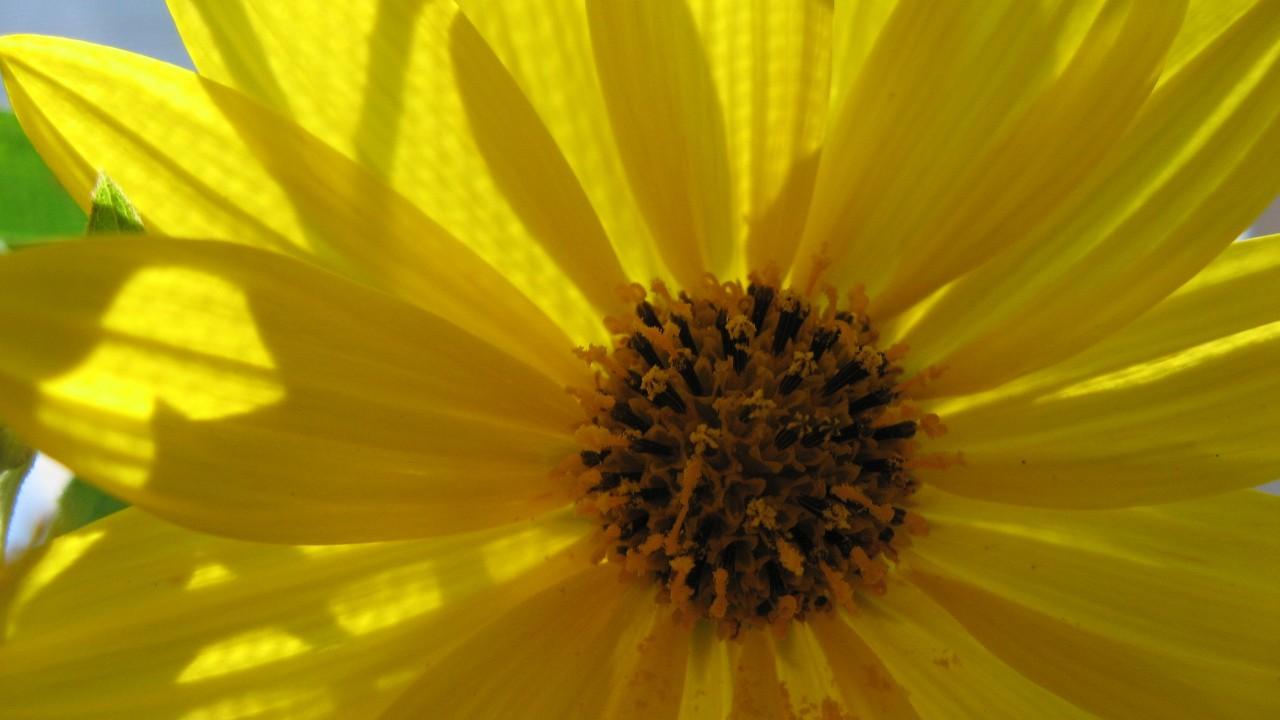 woodland sunflower vase