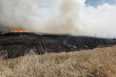 Prescribed burn FWMA April 27th 2020 image 1_resize